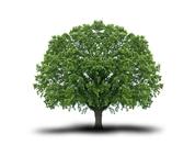 Andreas Strobl - Baum-, Strauch- und Heckenschnitt
