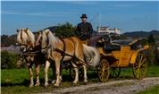 Franz jun. Winter - Fiaker und Pferdemietwagenunternehmen