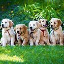 Belinda Fischer -  Energetik und Golden Retriever Hundezucht